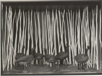 Mekaniska gäss - Centre Georges Pompidou, 1981.